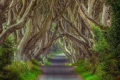 beautiful ireland landscape wallpapers Luxury Ireland Forest Wallpaper Desktop Background with Wallpaper High